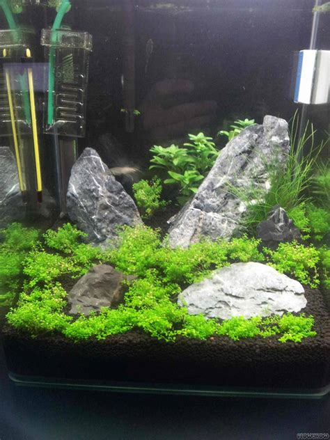 30l nano cube iwagumi flowgrow aquascape aquarium database