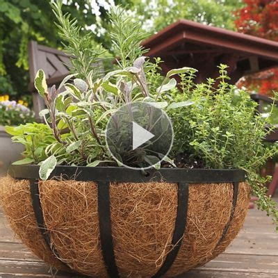 herb container gardens container gardening herbs