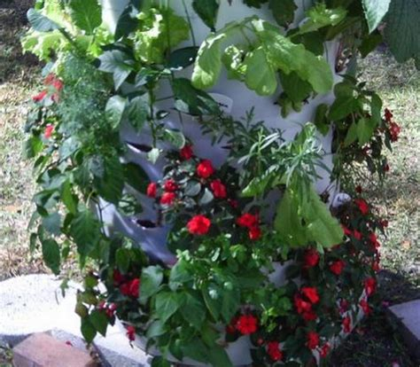 Plastic Barrel Strawberry Planter by Diy Barrel Planter The Owner Builder Network