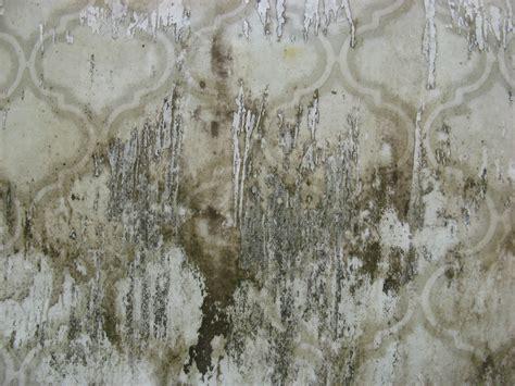 paint drip texture free grunge texture linoleum pattern drip
