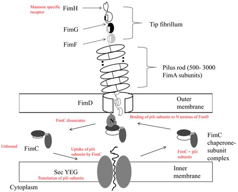 protein of pseudomonas pathogens free text biomolecular mechanisms of