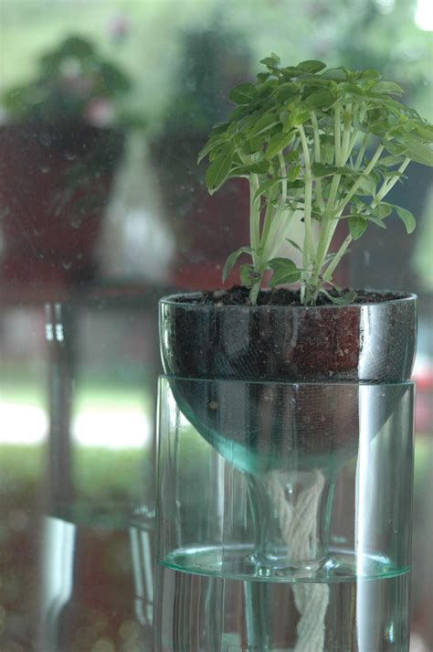 self water planter self watering planter made from recycled wine bottle perfect