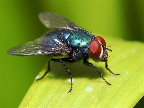 all tricks to rid your yard of insects the