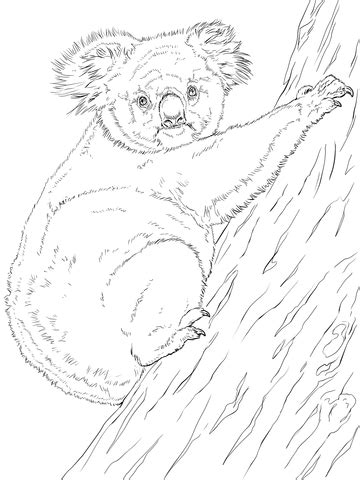 realistic koala coloring pages koala climbing tree coloring page super coloring