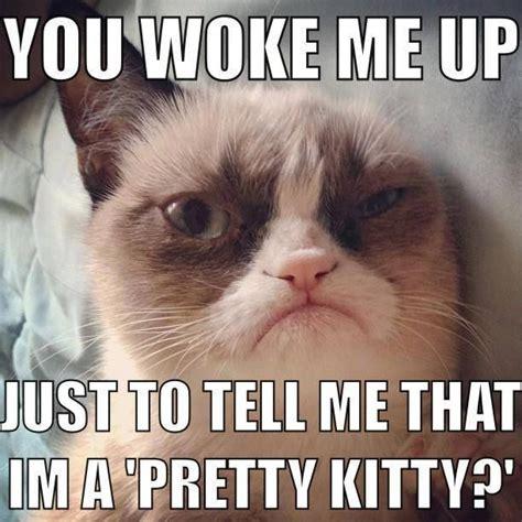 Cat Pictures Meme - grumpy cat quot funny cat captions quot pinterest