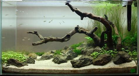 aquascaping with driftwood refonte pour aquascaping d 233 butant
