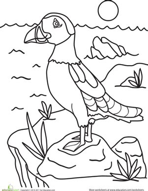 puffin bird coloring page puffin worksheet education com