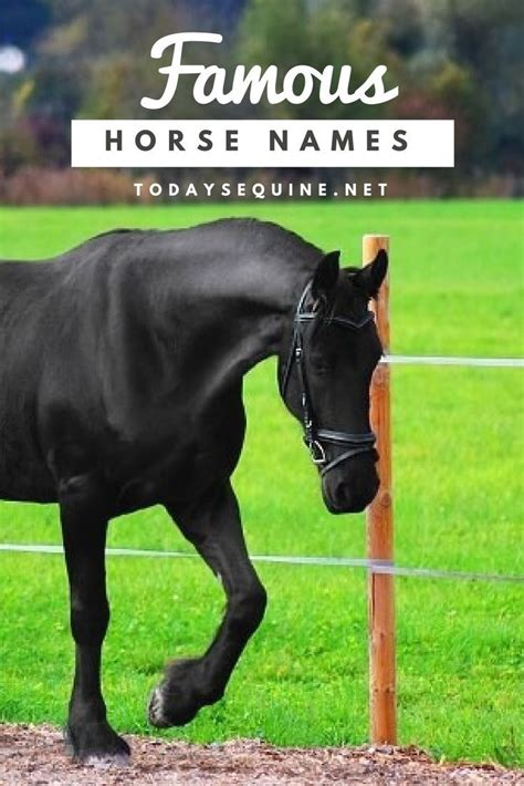 themes for names of horses 25 best ideas about horse names on pinterest baby