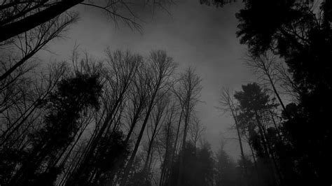 darkness beautiful dark themes black forest wallpapers wallpaper cave