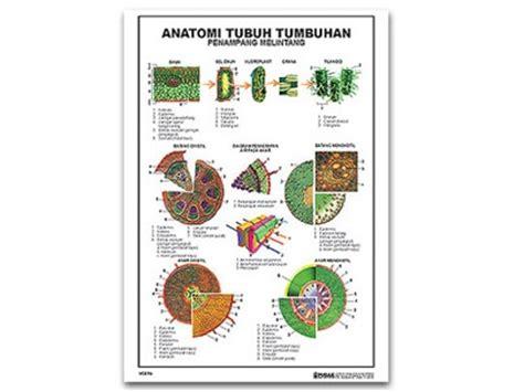 Carta Poster Struktur Akar Dikotil pudak scientific produsen alat peraga pendidikan dan peralatan laboratorium