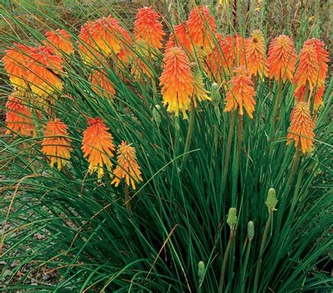 high heat plants 39 best images about high heat drought tolerant flowers and plants on gardens
