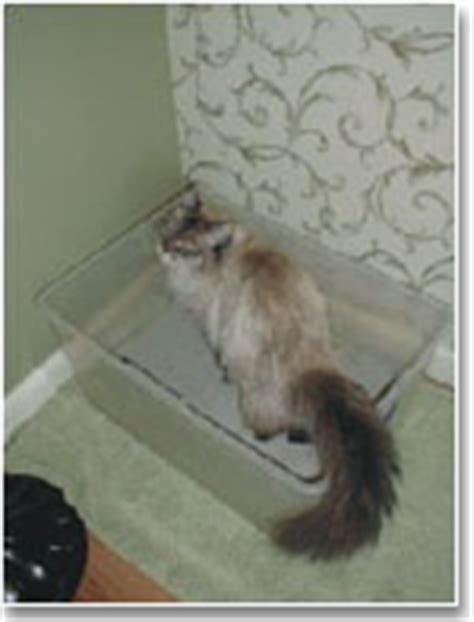 cat peeing in bathtub cat peeing problems