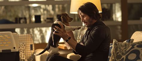 john wick 2 will not kill another adorable puppy