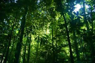 Rainforest photo page everystockphoto