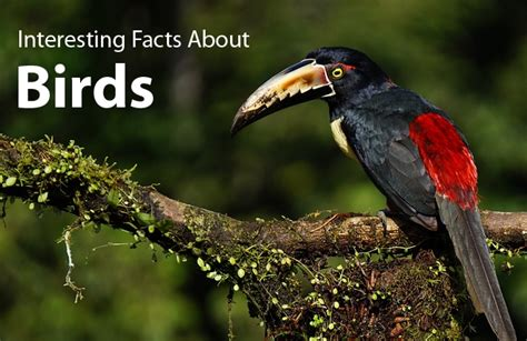 interesting facts about birds did you know science