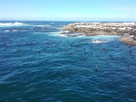 glass bottom boat cape town seal island