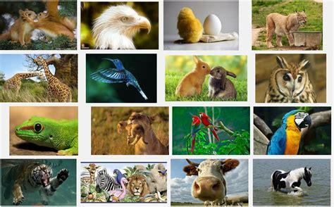 google images animals beautiful animals google images ireckonthat