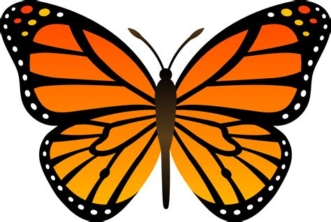 butterfly clipart orange monarch butterfly vector free clip