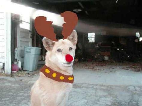 dogs singing jingle bells jingle bells jingle dogs doovi