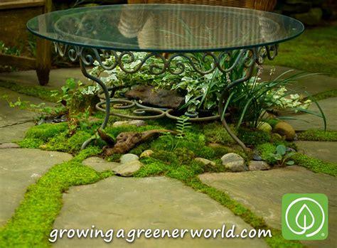 moss backyard episode 319 moss gardens growing a greener world 174