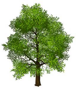 transparent green tree png picture gallery yopriceville