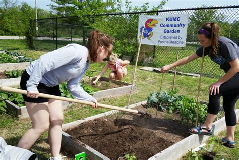 Starting A Community Garden by 10 Practical Steps To Help You Start A Community Garden Greenability Magazine