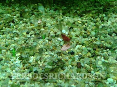 aquascape kecil inspirasi aquascape mungil yang indah ferboes