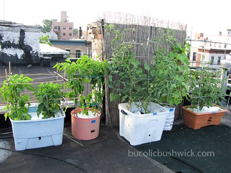 growing tips for rooftop vegetable gardening bucolic - Rooftop Gardening Containers