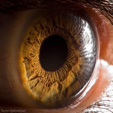 randomnies eye macro photography