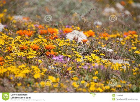 ci fioriti ci fioriti immagine stock immagine di occidentale
