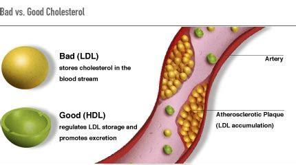 what makes our blood cholesterol high?   health and food tips