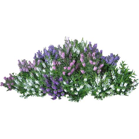 Wisteria Floor Plan by Bushes Png Images Free Download Bush Png