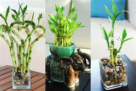 cara membuat siomay hoki 7 tanaman hias yang bisa anda pilih untuk diletakkan di