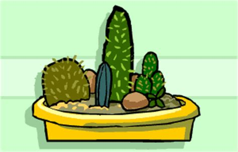 succulents plants adaptations for kids bbc gardening gardening guides gardening with