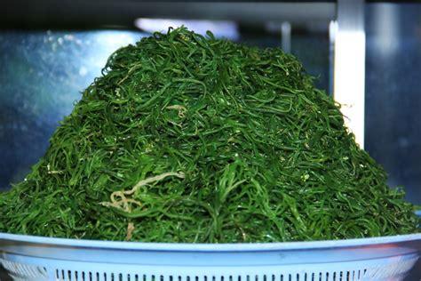 olahan rumput laut bercita rasa gurih pedas khas bali