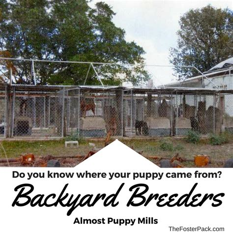 what is a backyard breeder backyard breeders almost puppy mills 187 the foster pack