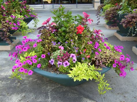 best flowers for small pots best plants for container garden ward log homes