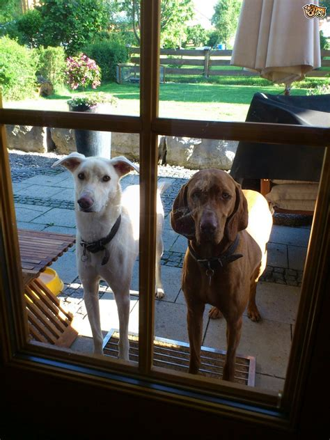 Stop From Jumping On Door by How To Stop Your From Jumping At Glass Doors Pets4homes