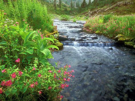 peru natural eden of flores na beira do rio pap 233 is de parede para pc fotos lagos e riachos imagens e wallpapers
