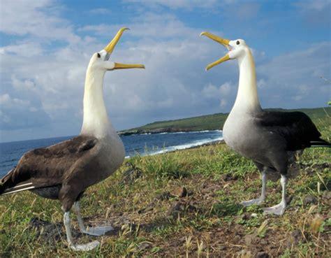 Alat Tes Dna Burung zona belajar tugas makalah ekologi hewan