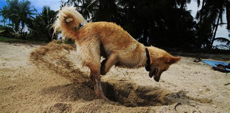 why do dogs dig holes in the backyard how to stop your dog from digging dog training basics