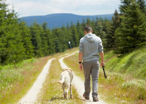 when can i start walking my puppy 7 ways walking a can boost your health photo gallery