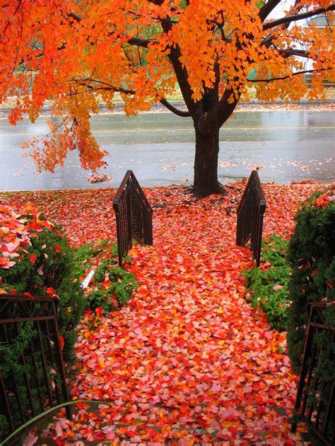 imagenes de invierno otoño verano primavera imagenes de otono gallery