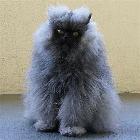 cat hair cat bad hair days popsugar pets