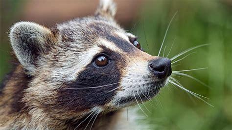 regulators move  limit wildlife deaths  misuse