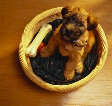 alimentazione cucciolo alimentazione per i cuccioli di cuccioli cani