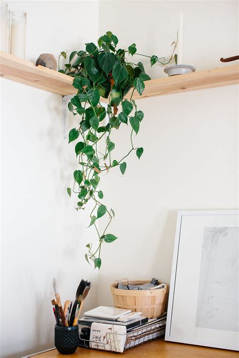 indoor plants  serial plant killers