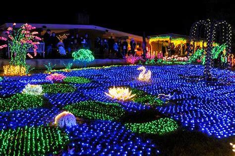 bellevue botanical gardens lights garden d lights light show at bellevue botanical