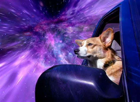 dogs in space warp dogs dogs hanging out of car windows traveling through outer space at warp speed