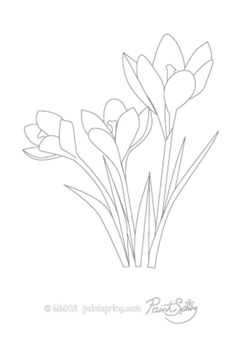 crocus flower coloring page printable flower adult coloring book get 3 free pages